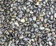 Shiny Wet Pebbles Stock Photos