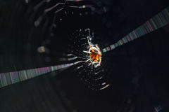 Shiny yellow small European spider in center of the web. Macro shot, black background, selective focus on spiders eyes royalty free stock photo