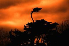 Shioulett ενός δέντρου στο πορτοκάλι Στοκ φωτογραφίες με δικαίωμα ελεύθερης χρήσης