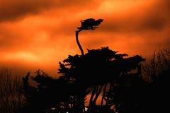 Shioulett di un albero in arancia Fotografie Stock Libere da Diritti