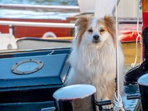 Ship dog is sitting on the deck of a tugboat royalty free stock photos