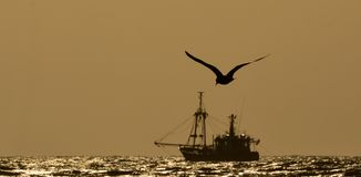 Ship and gull in the evening sun. In the evening a gull is flying above the sea Royalty Free Stock Images