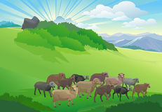 Ship herd grazing on country hillside Royalty Free Stock Image