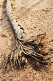 Ship rope in sand Royalty Free Stock Image