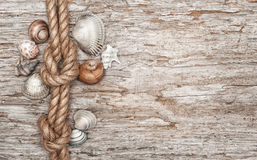 Ship rope, shells and old wood Royalty Free Stock Images
