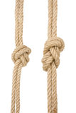 Ship ropes with a knot isolated Stock Image