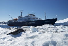 Ship sailing through the ice drift. And hair seal in Antarctica Royalty Free Stock Photography
