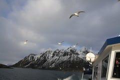 Ship and sea gulls Stock Photos