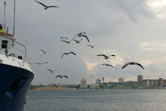 Ship and seagulls - 2. Fishing boat and seagulls off the coast of the Black Sea in Bulgaria Royalty Free Stock Photo