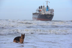 Ship stranded in Wijk aan Zee, The Netherlands Stock Photography