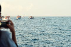 Ship with tourists. Watching the whales Royalty Free Stock Images