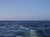 Ship trails in open sea Stock Image