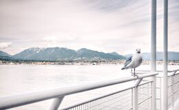 Ship View of White Bird on White Steel Rail during Daytime Stock Photography