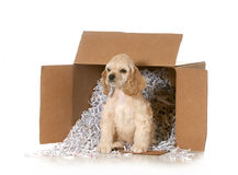 Shipping animals Royalty Free Stock Image