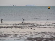 Shipping lane and seagulls on low tide stock video