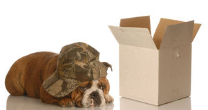 Shipping moving or packing Stock Photos