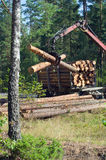 Shipping timber. Loading felled trees in the timber crane Stock Photography
