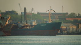 Ships are in the port. Seagulls fly over the water in the port area. Cargo ships stock video