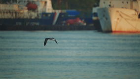 Ships are in the port. Seagulls fly over the water in the port area. close-up stock video