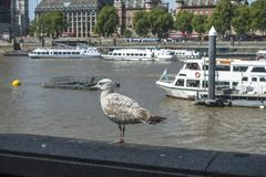 Ships on the Thames in London. Ships on the Thames river in London City and bird on the edge . Europe stock images