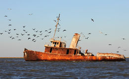 Shipwreck. Forgotten ship is now occupied by birds Stock Photos