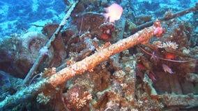 Shipwreck na dnie morskim zbiory