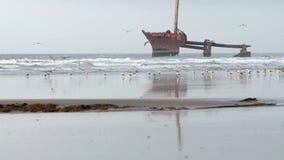 Shipwreck na plaży w Maroko zbiory wideo