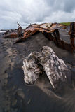 Shipwreck on Patea Beach. Driftwood and SS Waitangi shipwreck on the black sands of Patea Beach in New Zealand Stock Image