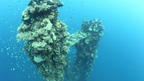 Shipwreck and Reef Fish. A Japanese shipwreck in Palau, sunk during World War II, now serves as an artificial reef and is home to many small reef fishes stock video