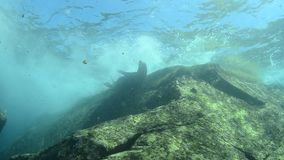 Shipwreck. From the sea of cortez stock video