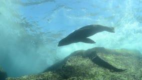 Shipwreck stock video
