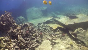Shipwreck on the Seabed. Shoot of Shipwreck on the Seabed, Red Sea stock video