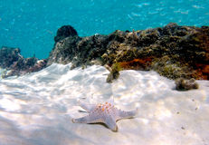 Shipwreck starfish Stock Image