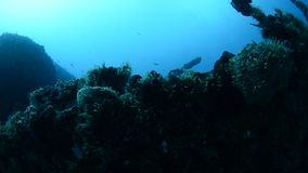 Shipwreck. Sunken in the Mexican caribbean stock video