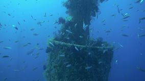 Shipwreck underwater on background of school of fish soup in Red Sea Egypt. Shipwreck underwater in Red Sea Egypt. Ghost ship in blue lagoon on coral reef stock video footage