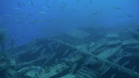 Shipwreck underwater in Red Sea Egypt. Ghost ship background of fish in the blue lagoon on coral reef. Extreme tourism.Deep diving stock video