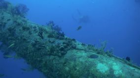 Shipwreck underwater in Red Sea Egypt. Ghost ship background of fish in the blue lagoon on coral reef. Extreme tourism.Deep diving. Terribly eerie place stock footage