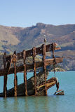 Shipwreck with White Face Heron Stock Image