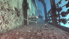 Shipwrecks Salem Express shipwrecks underwater in the Red Sea in Egypt. Extreme tourism on the ocean floor in the world of coral reefs, fish, sharks stock footage