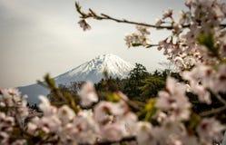 Shiraito fällt - Fuji - Japan Stockbild