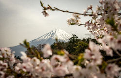 Shiraito tombe - Fuji - le Japon Image stock