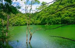 Shirakami-Sanchi in Aomori, Japan Royalty Free Stock Photo