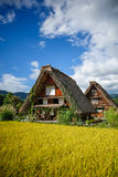 Εποχή του χωριού συγκομιδών Shirakawa Στοκ Φωτογραφία