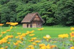 Shirakawa-gehen Bauernhof mit gelben Blumen lizenzfreie stockbilder