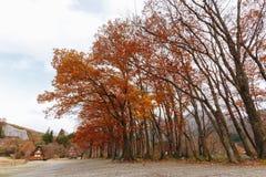 Shirakawa by i den sena november hösten som övervintrar säsong Royaltyfria Foton