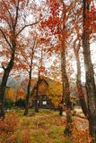 Shirakawa by i den sena november hösten som övervintrar säsong Royaltyfri Fotografi