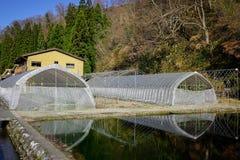 Shirakawago的,日本塑料温室 库存图片