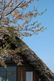 Shirakawago Dachkirsche Stockfotos