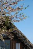 Shirakawago dachowa wiśnia Zdjęcia Stock