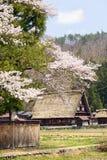 Shirakawago-Dorf mit Kirschblüte Stockfotos